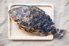 Grilled nile tilapia fish Royalty Free Stock Image