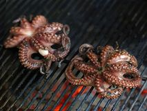 Grilled octopus, fish is cooking on a grill, close up stock photos