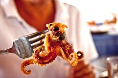 Grilled octopus on a fork royalty free stock photo