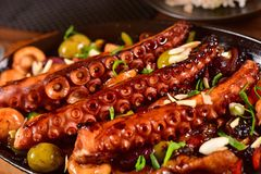 Grilled octopus plate. Close up on grilled octopus plate Royalty Free Stock Photography
