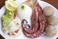 Grilled octopus tentacles on a plate Royalty Free Stock Photography