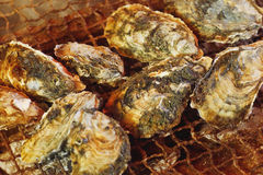 Grilled oyster Royalty Free Stock Photos