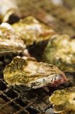 Grilled oyster Royalty Free Stock Photography
