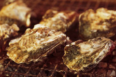 Grilled oyster Royalty Free Stock Images