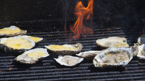 Grilled Oysters 1 Royalty Free Stock Photo