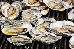 Grilled Oysters. Fresh oysters on the Grill Stock Photos