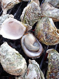 Grilled oysters Royalty Free Stock Image