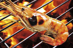 Grilled prawn Stock Image