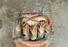 Grilled prawns on the barbecue rack Royalty Free Stock Images