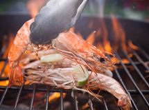 Grilled prawns Stock Image