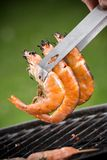 Grilled prawns Stock Photos