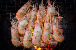Grilled prawns Stock Images