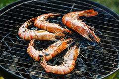 Grilled Prawns on grill BBQ background stock image