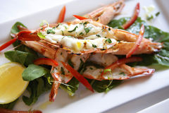Grilled Prawns, Rocket & Tomato Vinaigrette Royalty Free Stock Image