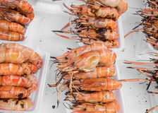 Grilled prawns for sale Stock Images