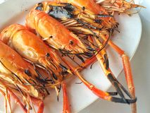 Grilled prawns. Seafood, Thai food Stock Photo