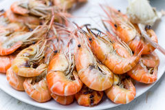 Grilled prawns (shrimp) Stock Image
