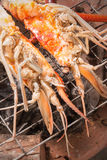 Grilled prawns. Stock Images