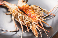 Grilled prawns. Stock Photography