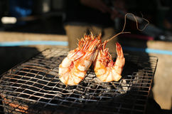 Grilled prawns Royalty Free Stock Photos