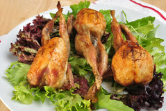 Grilled quails on a plate Stock Image