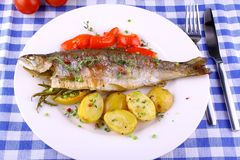 Grilled rainbow trout with potato, red pepper and lemon Stock Image