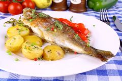 Grilled rainbow trout with potato, red pepper and rosemary. Close up royalty free stock photos