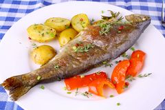 Grilled rainbow trout with red pepper, potato and herbs. Close up stock images