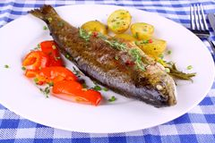 Grilled rainbow trout with red pepper, potato and herbs. Top view stock photography