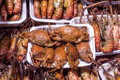 Grilled rawn and Grilled Crab Delicious Seafood Royalty Free Stock Photos