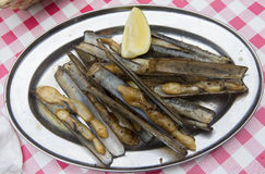 Grilled razor clams Royalty Free Stock Image