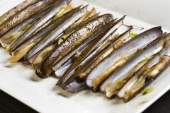 Grilled razor clams Royalty Free Stock Images