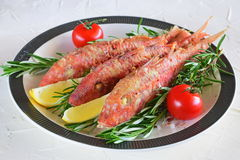 Grilled red mullet in a plate with herbs, tomato and lemon. Healthy food. Mediterannean lifestyle Stock Photo
