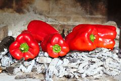 Grilled red peppers ember fire Royalty Free Stock Images