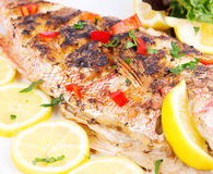 Grilled red snapper Royalty Free Stock Image