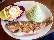 Grilled red snapper with rice and cole slaw. Grilled red snapper from Belize plated with rice and cole slaw Royalty Free Stock Photos