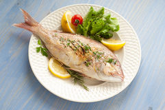 Grilled red snapper with salad Royalty Free Stock Image