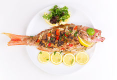 Grilled red snapper with salad Royalty Free Stock Images