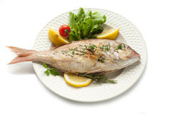 Free Grilled Red Snapper With Salad Royalty Free Stock Photos - 13893688