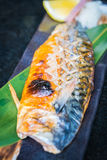 Grilled saba fish Stock Images