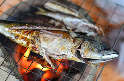 Grilled Saba Royalty Free Stock Photography