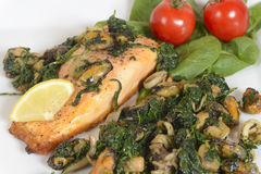Grilled salmon with seafood and spinach Royalty Free Stock Image