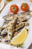 Grilled sardine fish. Served with lemon and rosemary Stock Images