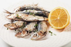 Grilled sardine fish with lemon and herbs Stock Image