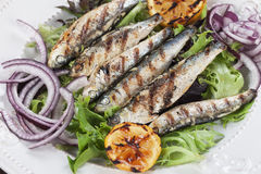 Grilled sardine fish Royalty Free Stock Image