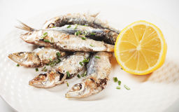 Grilled sardine fish Royalty Free Stock Photo