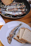 Grilled sardine in a pan Stock Photography