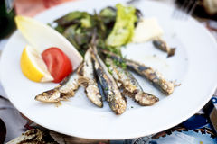Grilled sardines. royalty free stock images