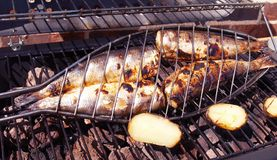 Grilled Sardines. Fish Barbecue Royalty Free Stock Image
