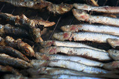 Grilled sardines. From Adriatic sea Stock Photo